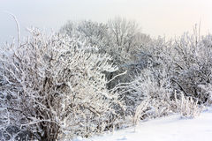 Winter view Royalty Free Stock Photos
