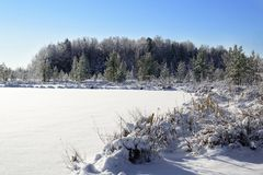 Winter time in forest lake. Trees and shore in snow. A frozen lakeon a frosty winters day. Royalty Free Stock Images