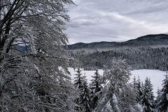 Winter view of a mountain forest Royalty Free Stock Image