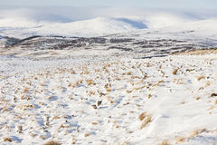 Winter view over felled forest and Corgarff in Scotland. Stock Photo