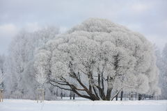 Winter view in the park Royalty Free Stock Photography