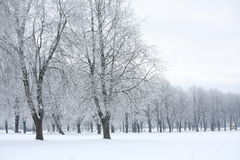 Winter view in the park Stock Photography