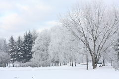 Winter view in the park Royalty Free Stock Photos