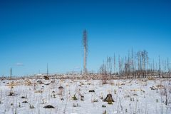 Winter view of the remains of a forest ravaged by a fire stock photography