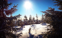 Winter view. Snow-covered trees in winter royalty free stock images