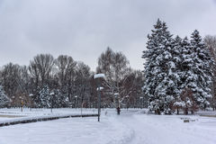 Winter view with snow covered trees in South Park in city of Sofia, Bulgaria Stock Images