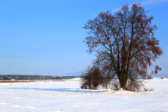 Winter view with tree. The snow-covered field with the tree on foreground Royalty Free Stock Photo