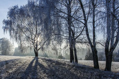 Winter view of trees covered with frost Stock Images
