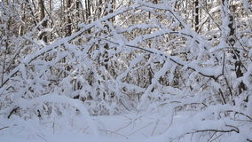 Winter View of trees covered with snow. The severity of the branches under the snow. Winter wonderland stock video footage