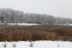 Winter. View of Ukrainian landscape in winter time Stock Photography