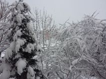Winter views Stock Photos