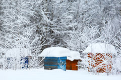 Winter in the village Royalty Free Stock Image