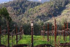 Winter Vineyard 1. Vineyard during Winter Season with Birdhouse in Napa Valley, California Royalty Free Stock Image
