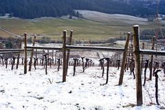Winter Vineyard Stock Photos