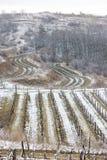 Winter vineyards. In Znojmo Region, Czech Republic Stock Photography