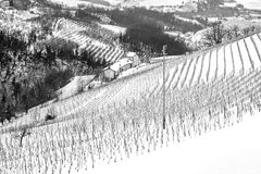 Winter vineyards textured panorama. Black and white photo. Winter view of the vineyards, covered by the snow, in the hilly region of Langhe in the southern area royalty free stock photos