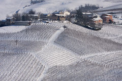 Winter vineyards and village. Winter view of vineyards and village of Casa Madama, Pavia, Italy royalty free stock photography