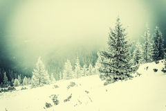 Winter vintage landscape with snowfal Royalty Free Stock Images