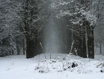 Winter vista Royalty Free Stock Photos