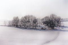 Winter in Vojvodina stock photo