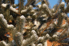 Winter in Vologda Lizenzfreie Stockfotos