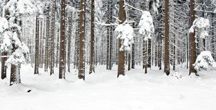 Winter-Wald Lizenzfreies Stockfoto