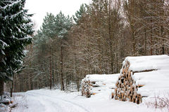 Winter-Wald Stockfoto