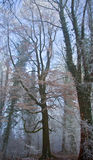 Winter-Wald Stockbild