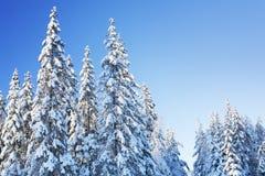 Winter-Wald Stockfotos