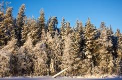 Winter-Wald lizenzfreie stockbilder