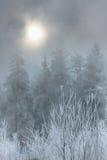 Winter-Wald Stockfoto
