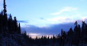 Winter-Wald Stockbilder