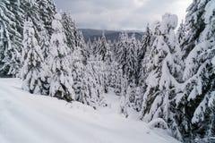 Winter-Wald abgedeckt von Snow Wintermärchenlandlandschaft Stockfotografie