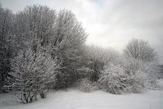 Winter-Wald auf Frosty Day Lizenzfreie Stockfotografie
