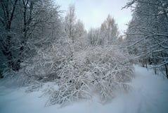 Winter-Wald auf Frosty Day Lizenzfreie Stockbilder