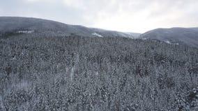 Winter-Wald gesehen vom Brummen stock video