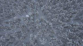 Winter-Wald gesehen vom Brummen stock footage