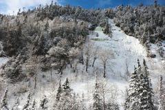 Winter-Wald mit gefrorenem Wasserfall Lizenzfreie Stockfotografie