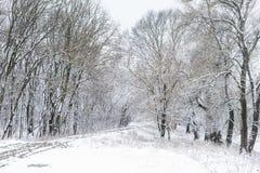 Winter-Wald mit Straße Lizenzfreie Stockfotos