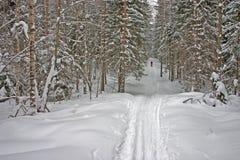 Winter-Wald. Skifahrer Lizenzfreie Stockfotografie