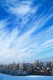 Winter-Wald und windiger Himmel Lizenzfreies Stockbild