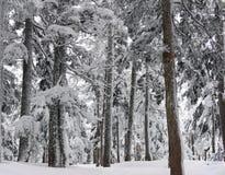 Winter-Wald unter dem Schnee Lizenzfreie Stockfotografie