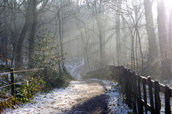 Winter-Waldland Stockfotos