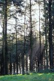 Winter-Waldland Lizenzfreies Stockfoto