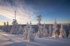 Winter-Waldung lizenzfreies stockfoto