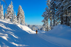 Winter walk. Walk through the fresh snow Royalty Free Stock Image