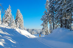 Winter walk. Walk through the fresh snow Royalty Free Stock Photography
