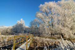 Winter Walk. Way. Bare trees with blue sky and wooden walkway stock images
