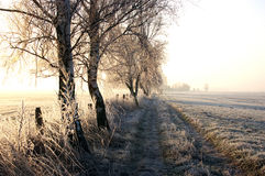 Winter walk. Walking way on one winter morning between fields with trees and hoarfrost Royalty Free Stock Photography