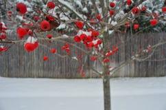 Winter Walk Stock Photos